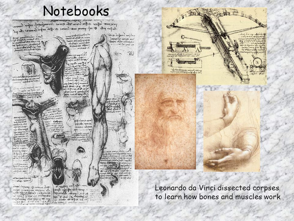 Notebooks Leonardo da Vinci dissected corpses to learn how bones and muscles work