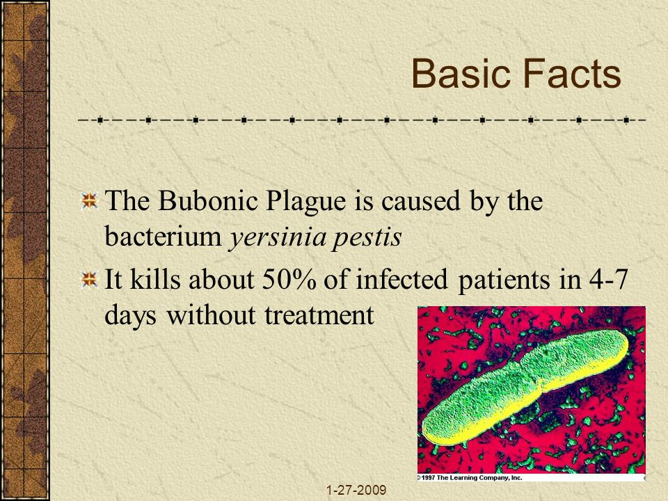 Basic Facts The Bubonic Plague is caused by the bacterium yersinia pestis. It kills about 50% of infected patients in 4-7 days without treatment.