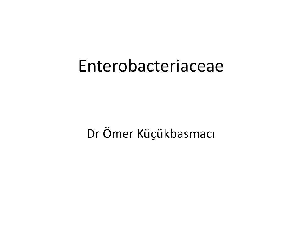 Enterobacteriaceae Dr Ömer Küçükbasmacı