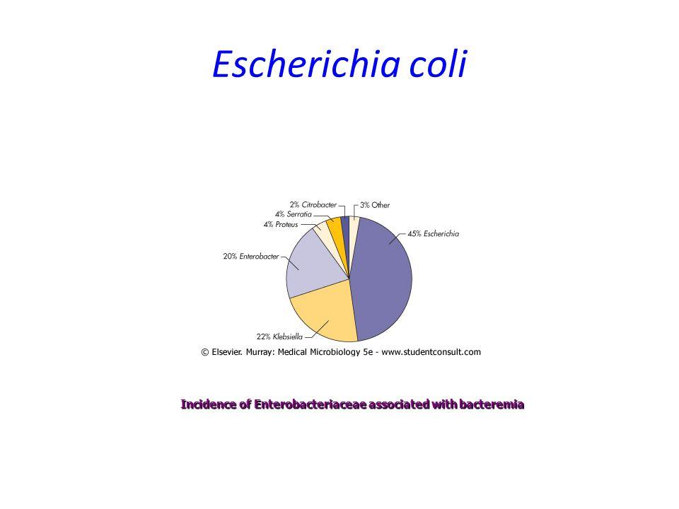 Escherichia coli Incidence of Enterobacteriaceae associated with bacteremia