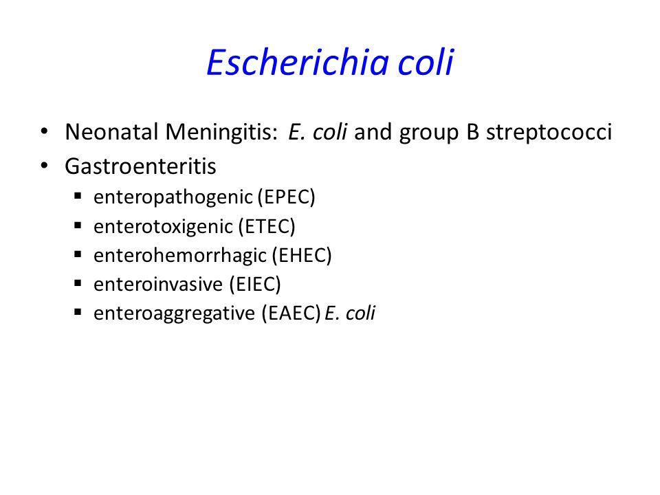 Escherichia coli Neonatal Meningitis: E. coli and group B streptococci