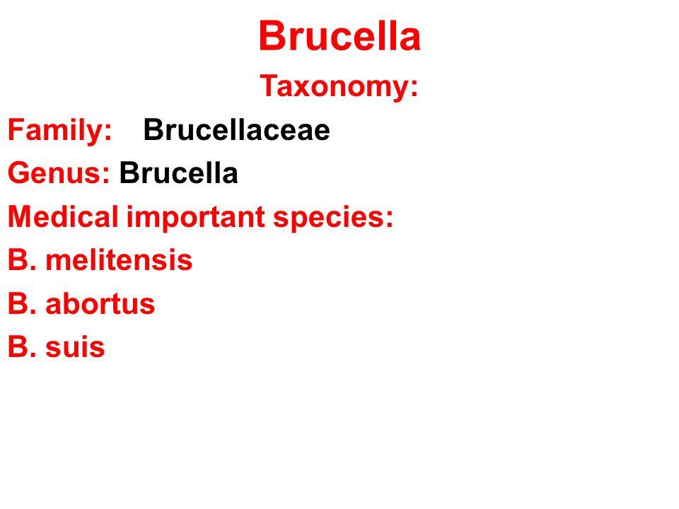 Brucella Taxonomy: Family: Brucellaceae Genus: Brucella Medical important species: B.