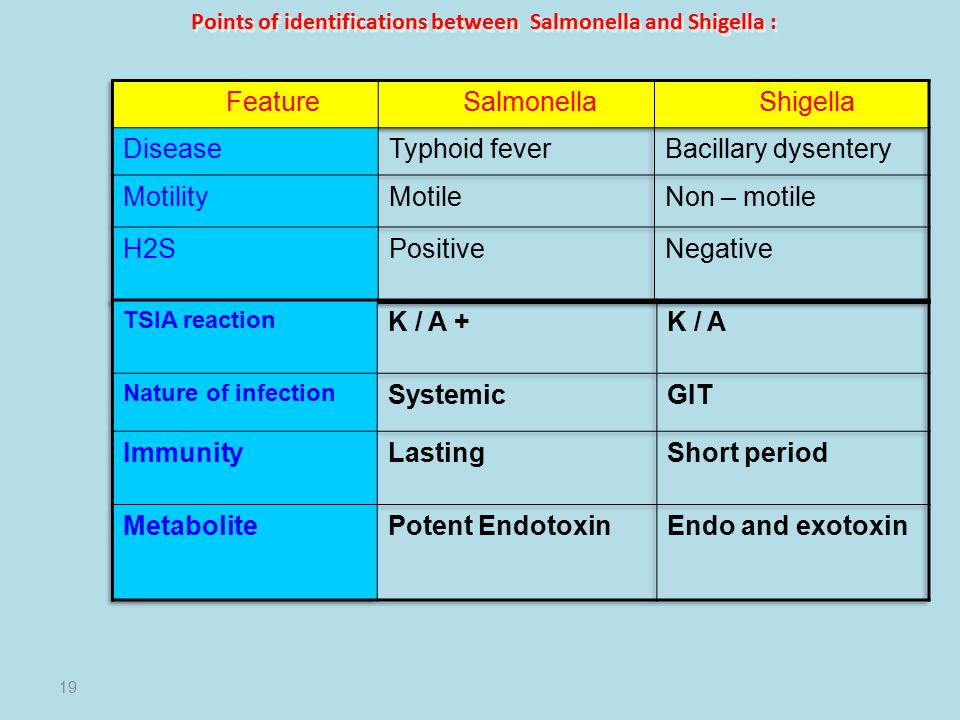 Points of identifications between Salmonella and Shigella :