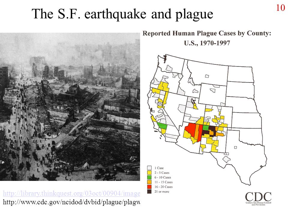The S.F. earthquake and plague