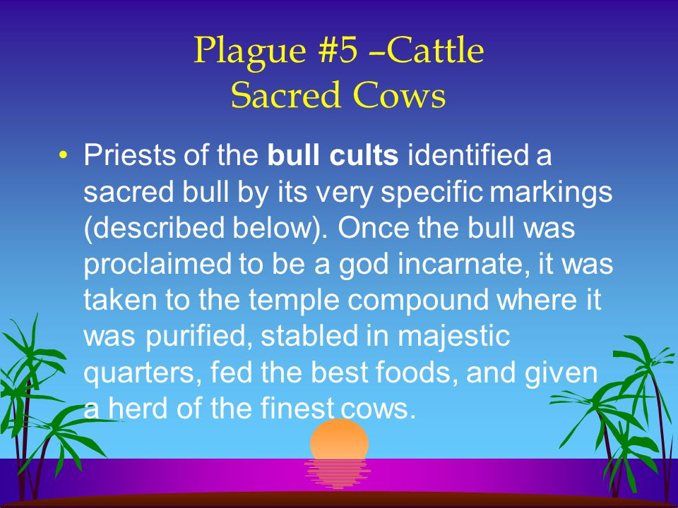 Plague #5 –Cattle Sacred Cows
