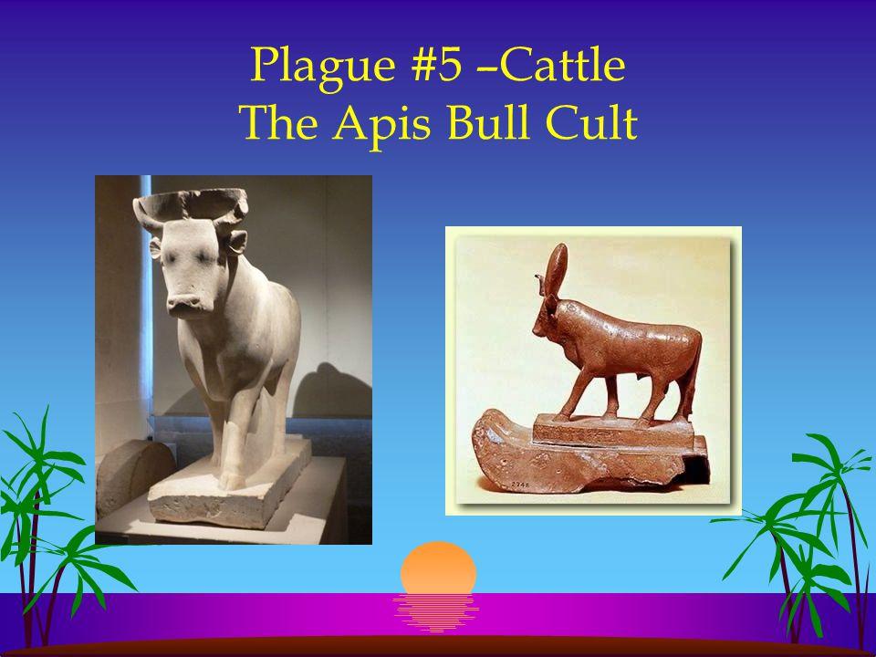 Plague #5 –Cattle The Apis Bull Cult