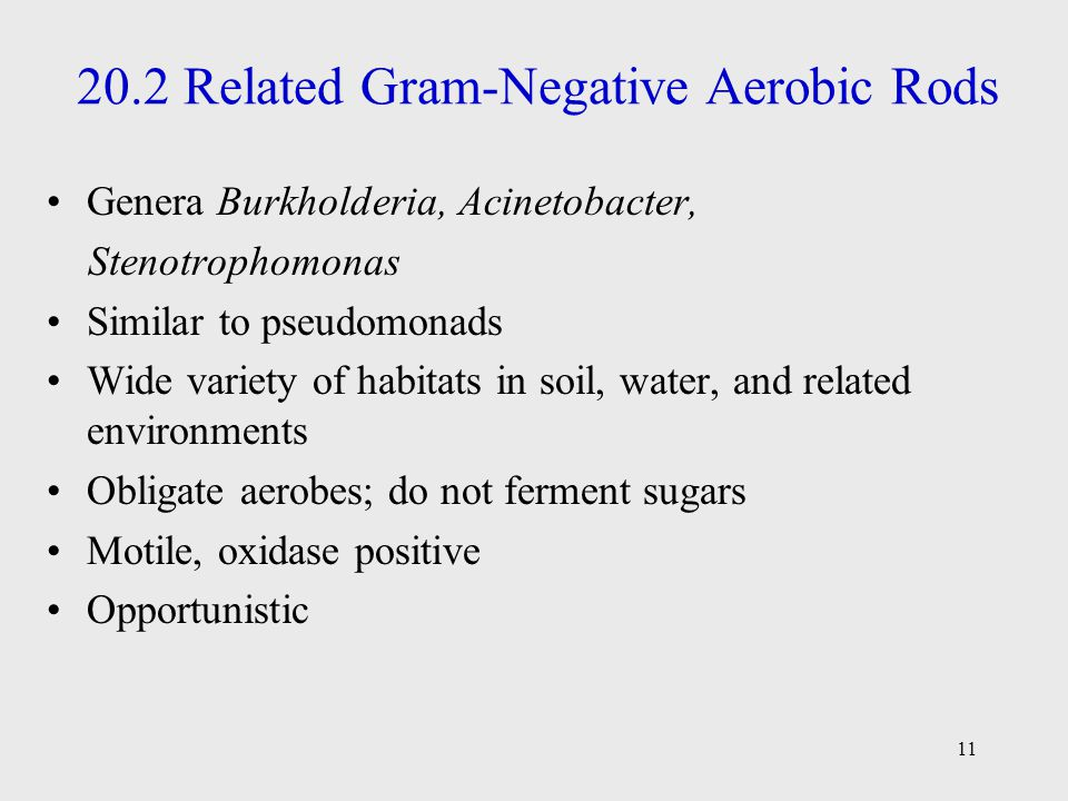 20.2 Related Gram-Negative Aerobic Rods