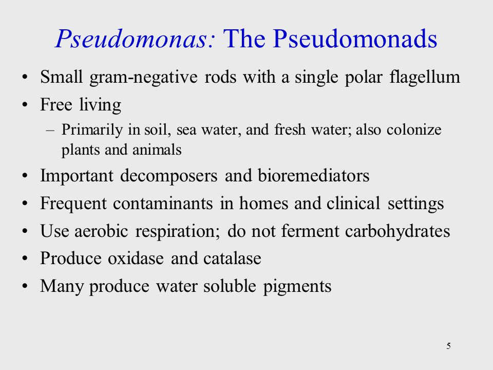 Pseudomonas: The Pseudomonads