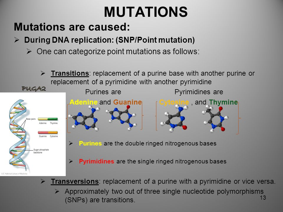 MUTATIONS Mutations are caused: