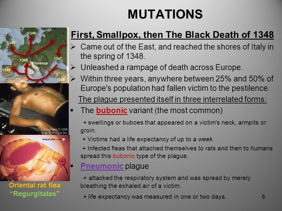 First, Smallpox, then The Black Death of 1348