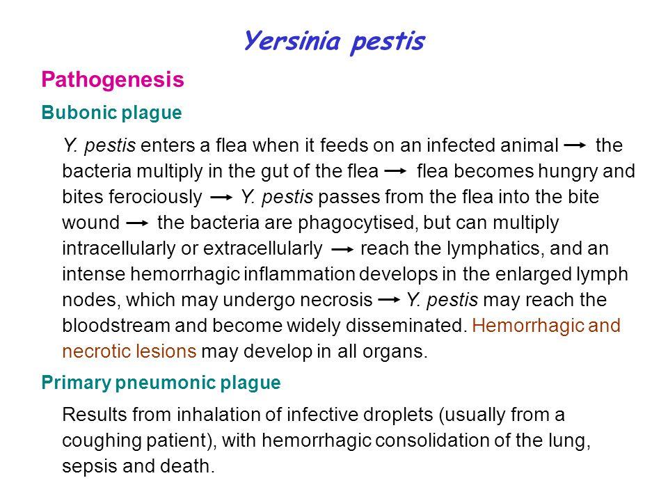 Yersinia pestis Pathogenesis Bubonic plague