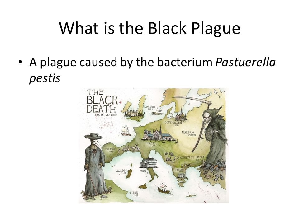 What is the Black Plague