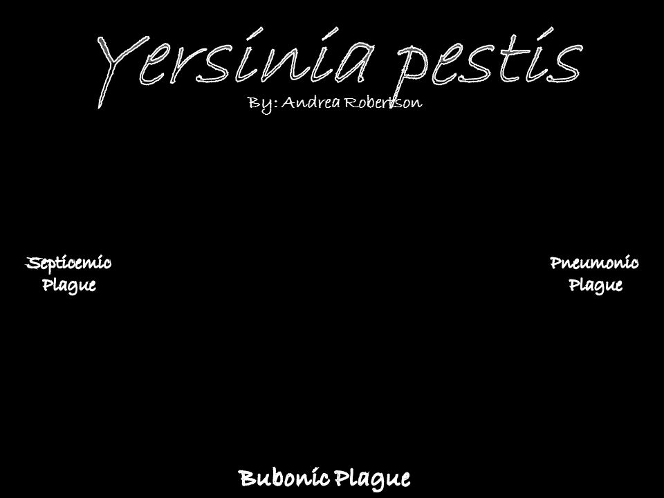 Yersinia pestis Bubonic Plague By: Andrea Robertson Septicemic Plague