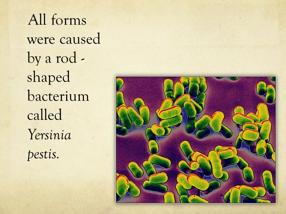 All forms were caused by a rod - shaped bacterium called Yersinia pestis.