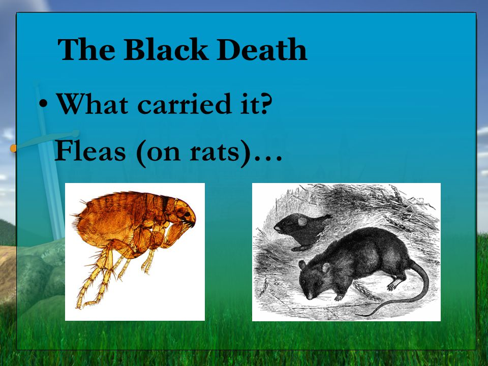 The Black Death What carried it Fleas (on rats)… 7.6.7