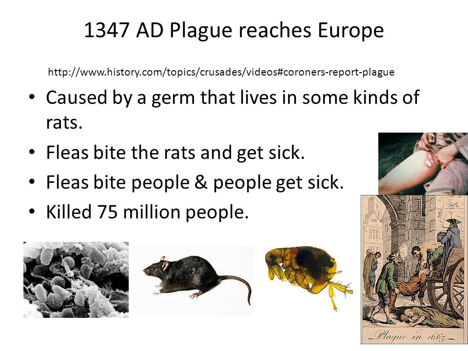 1347 AD Plague reaches Europe