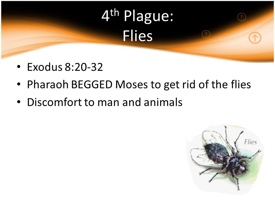 4th Plague: Flies Exodus 8:20-32