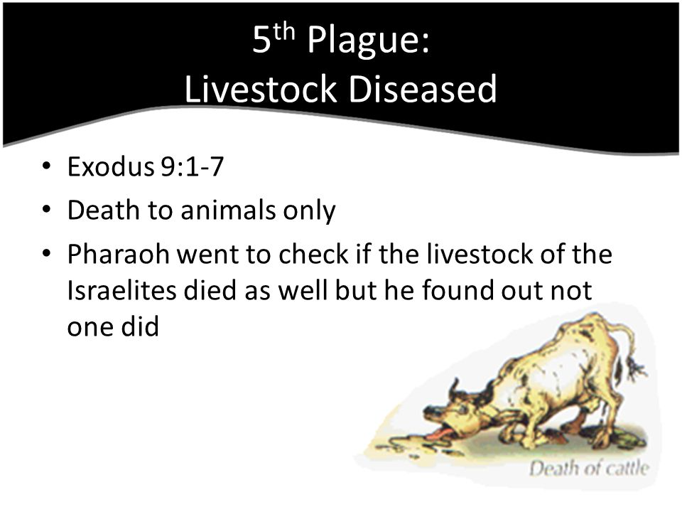 5th Plague: Livestock Diseased