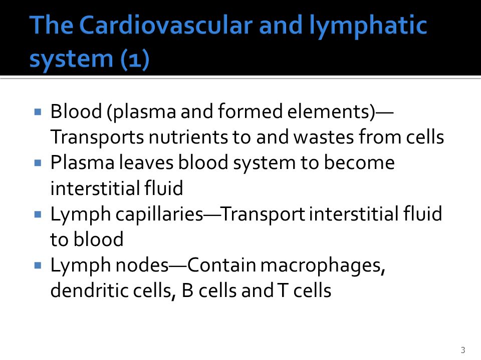 The Cardiovascular and lymphatic system (1)