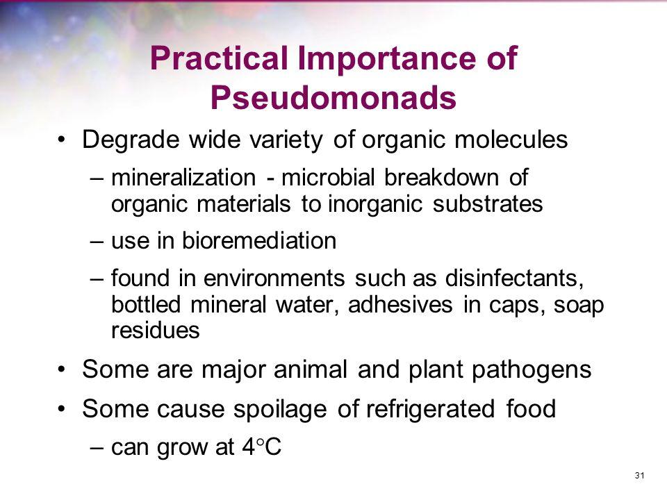 Practical Importance of Pseudomonads
