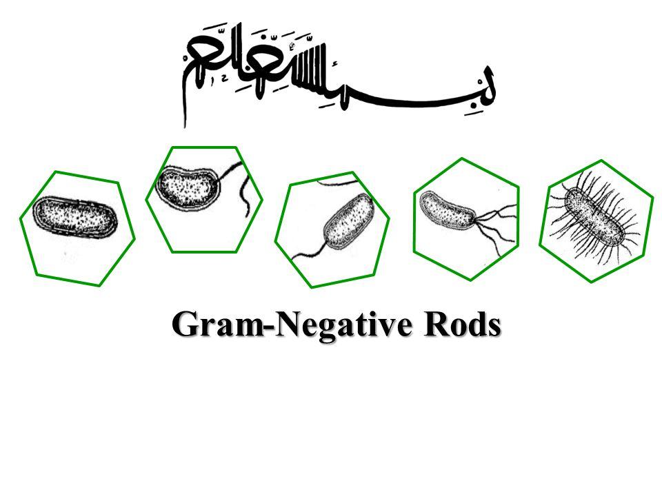 Gram-Negative Rods