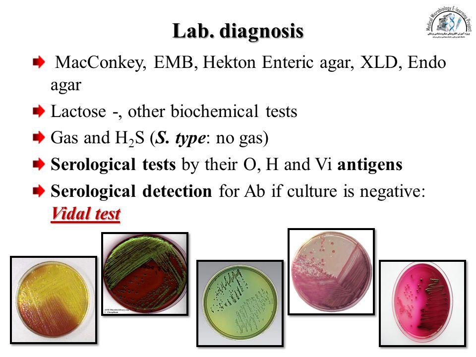 Lab. diagnosis MacConkey, EMB, Hekton Enteric agar, XLD, Endo agar