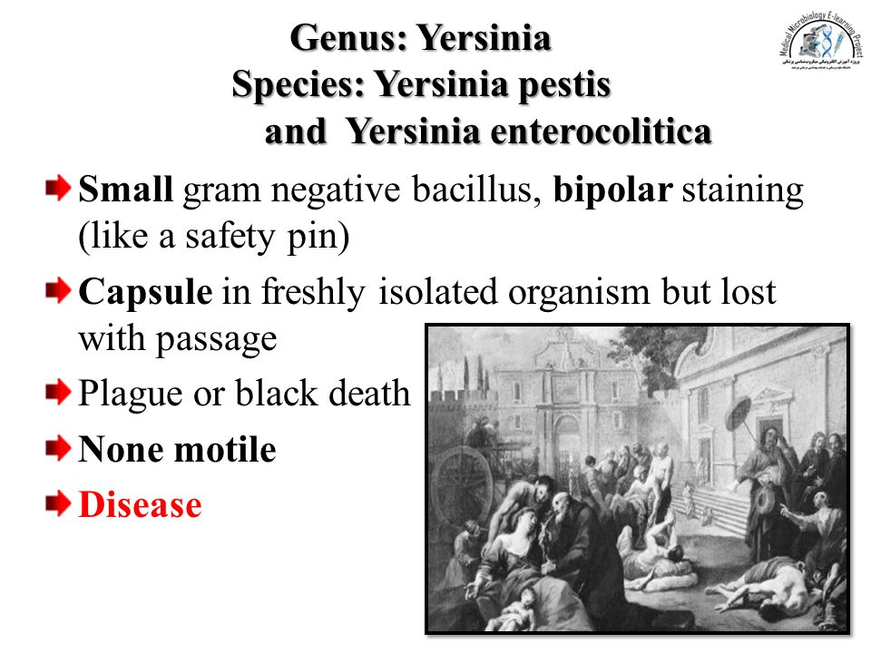 Genus: Yersinia Species: Yersinia pestis and Yersinia enterocolitica