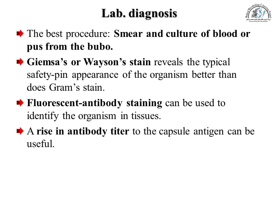 Lab. diagnosis The best procedure: Smear and culture of blood or pus from the bubo.