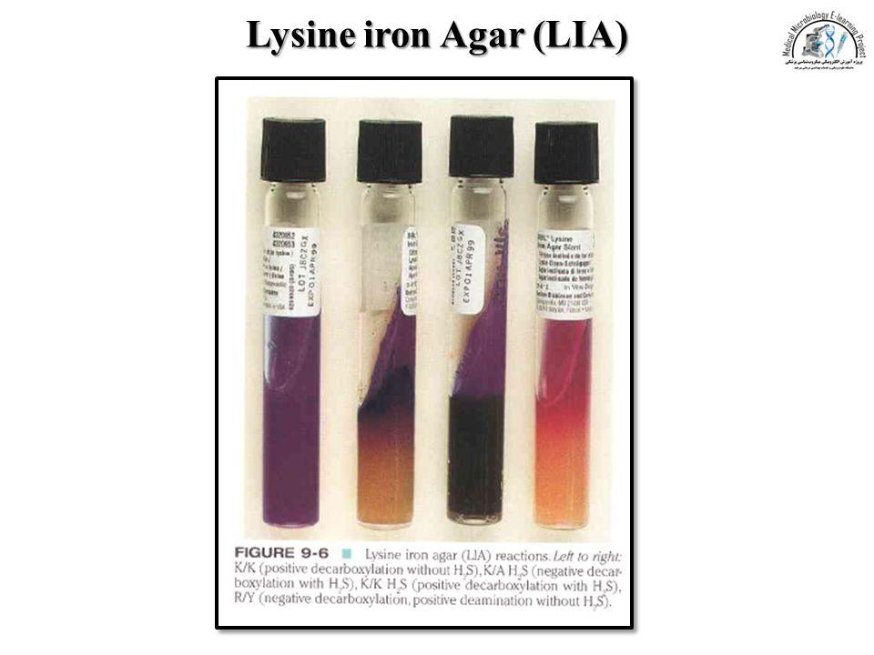 Lysine iron Agar (LIA)