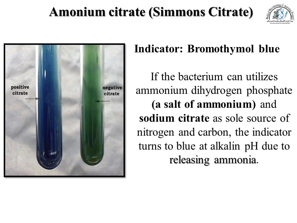 Amonium citrate (Simmons Citrate)