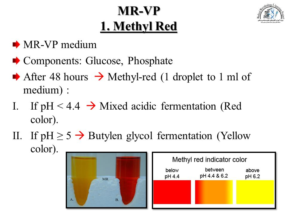 MR-VP 1. Methyl Red MR-VP medium Components: Glucose, Phosphate