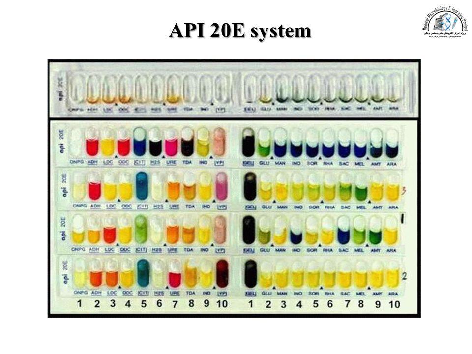 Api Color Code Chart