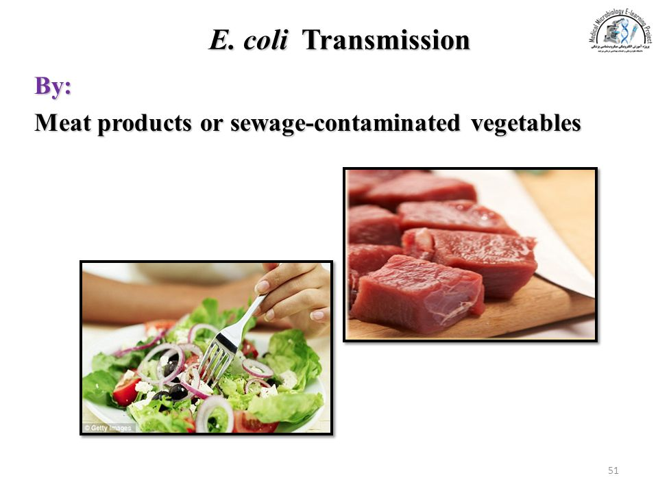 E. coli Transmission By: