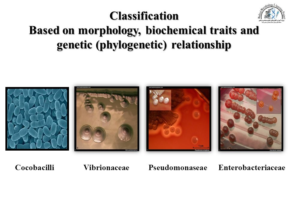 Classification Based on morphology, biochemical traits and genetic (phylogenetic) relationship