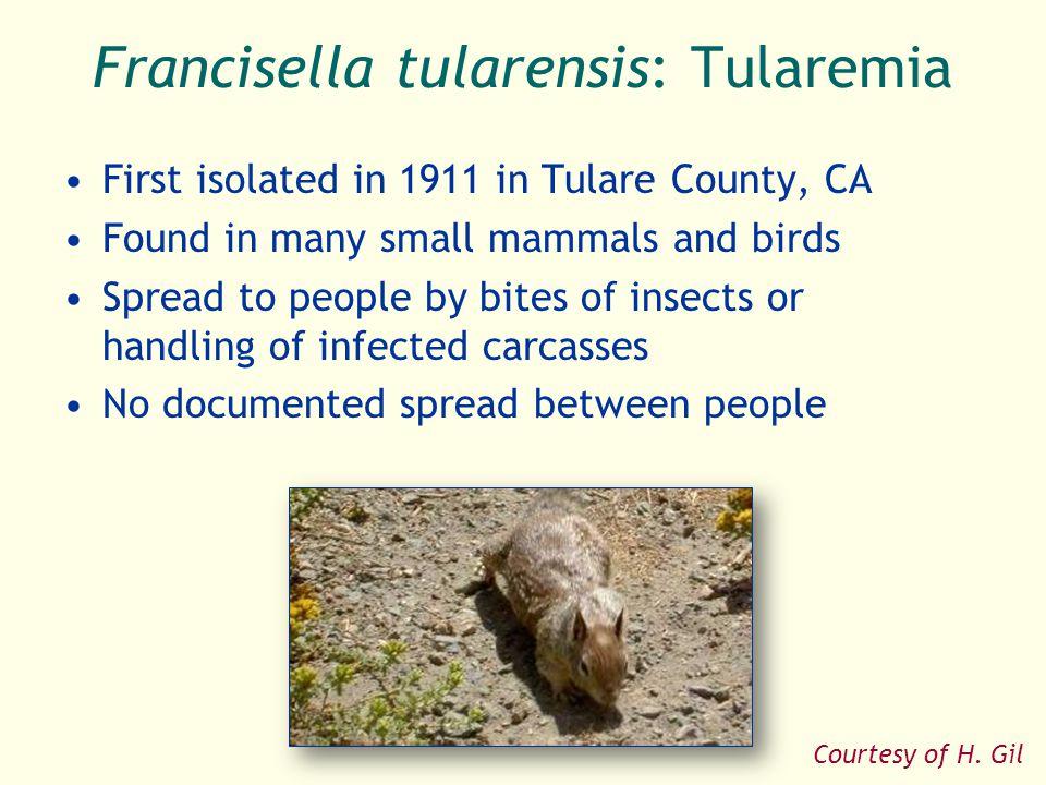 Francisella tularensis: Tularemia
