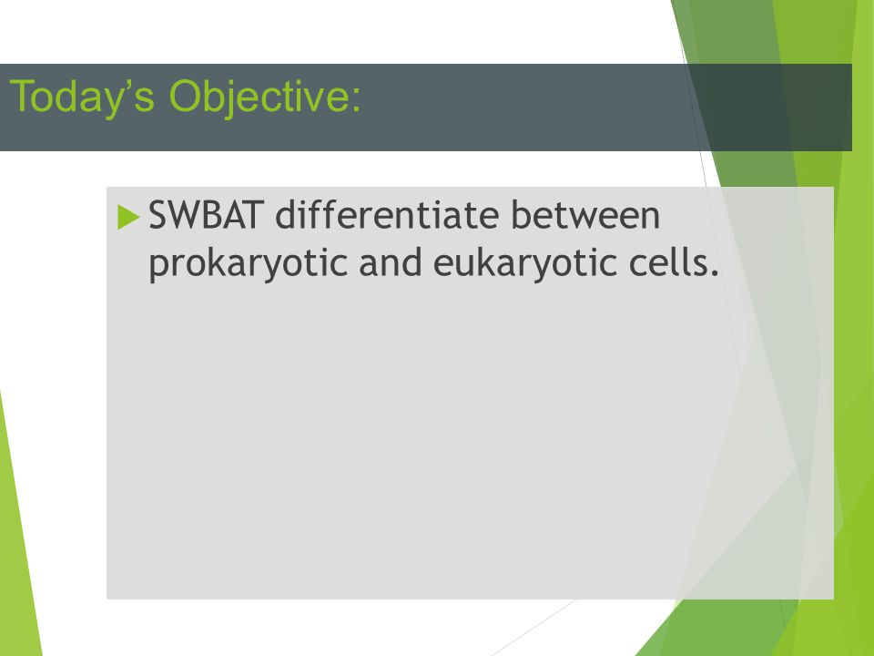 Today's Objective: SWBAT differentiate between prokaryotic and eukaryotic cells.