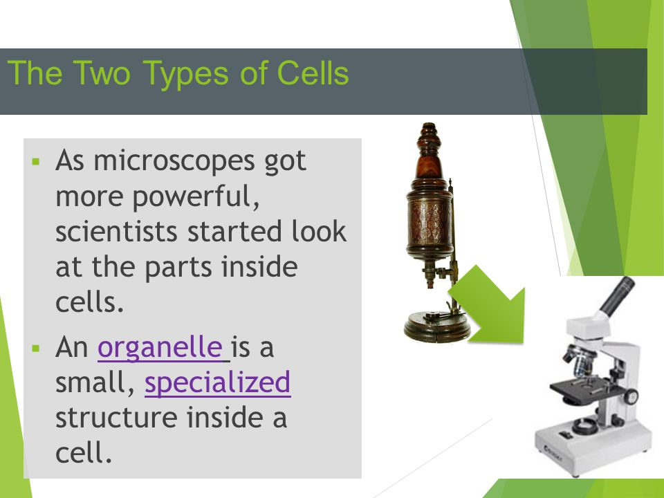 The Two Types of Cells As microscopes got more powerful, scientists started look at the parts inside cells.