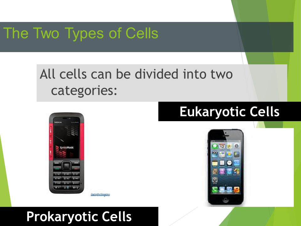 The Two Types of Cells All cells can be divided into two categories: