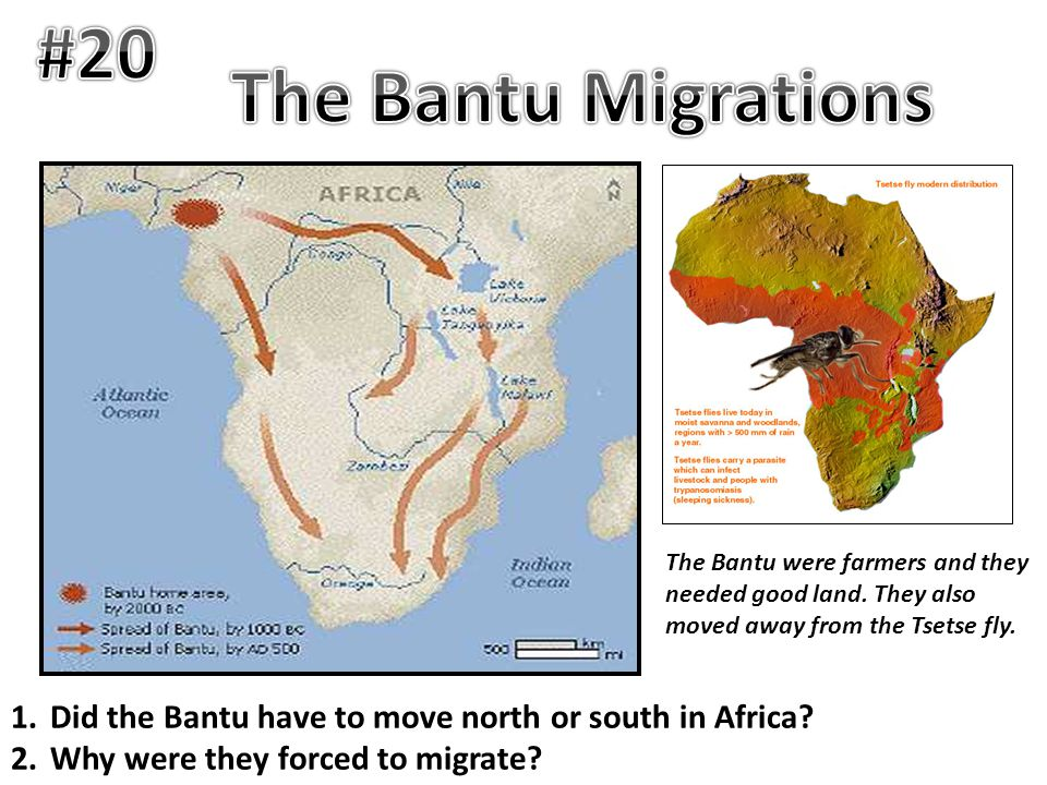 #20 The Bantu Migrations. The Bantu were farmers and they needed good land. They also moved away from the Tsetse fly.