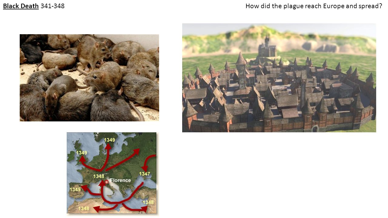 Black Death 341-348 How did the plague reach Europe and spread