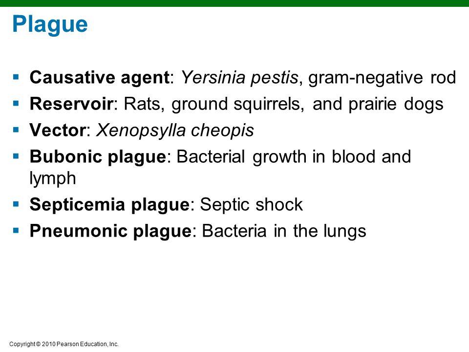 Plague Causative agent: Yersinia pestis, gram-negative rod