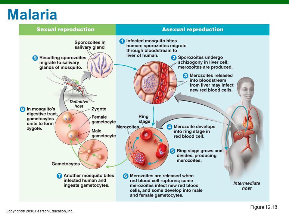 Malaria Figure 12.18