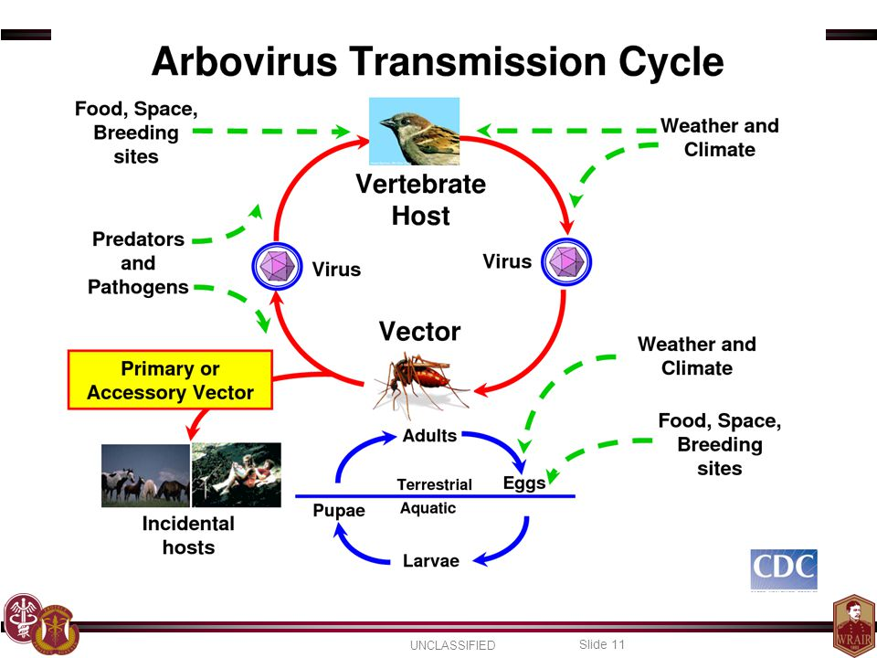 As a result of involving multiple species, a lot of factors that affect those other species, such as predators and climate, can affect the spread of arboviral disease.