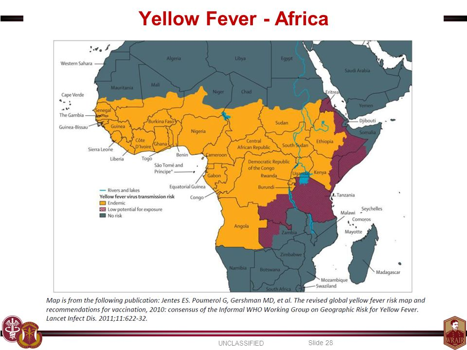 Yellow Fever - Africa