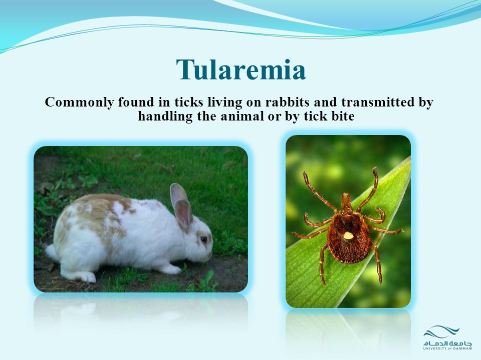 Tularemia Commonly found in ticks living on rabbits and transmitted by handling the animal or by tick bite.