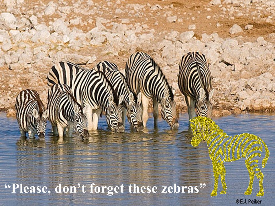 Please, don't forget these zebras