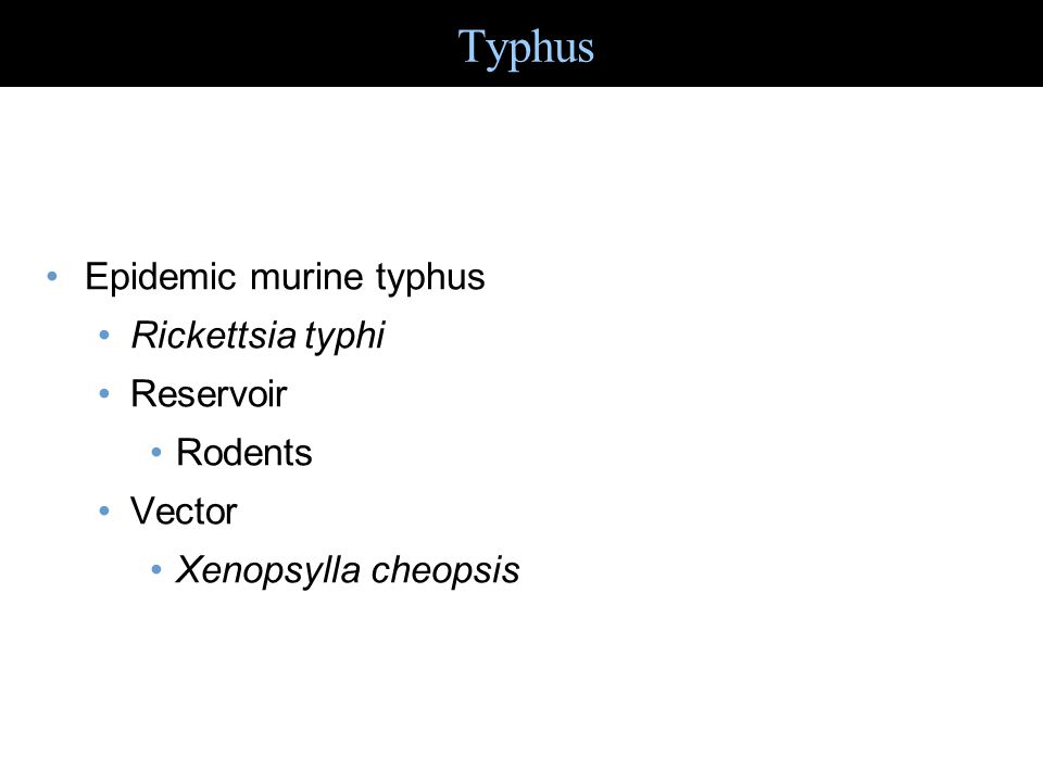 Typhus Epidemic murine typhus Rickettsia typhi Reservoir Rodents
