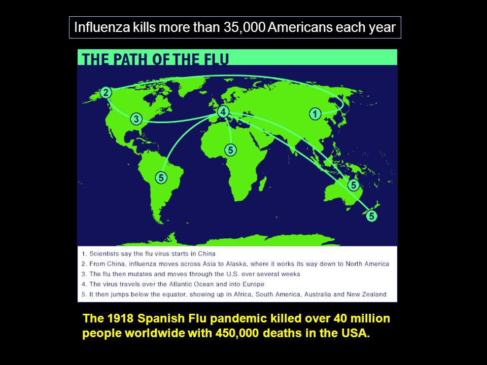 Influenza kills more than 35,000 Americans each year
