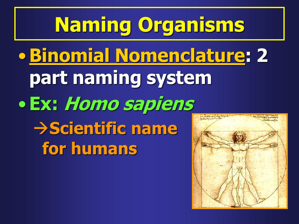 Naming Organisms Binomial Nomenclature: 2 part naming system