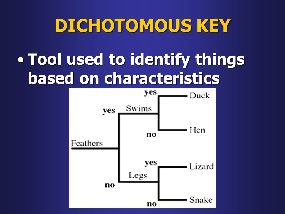DICHOTOMOUS KEY Tool used to identify things based on characteristics